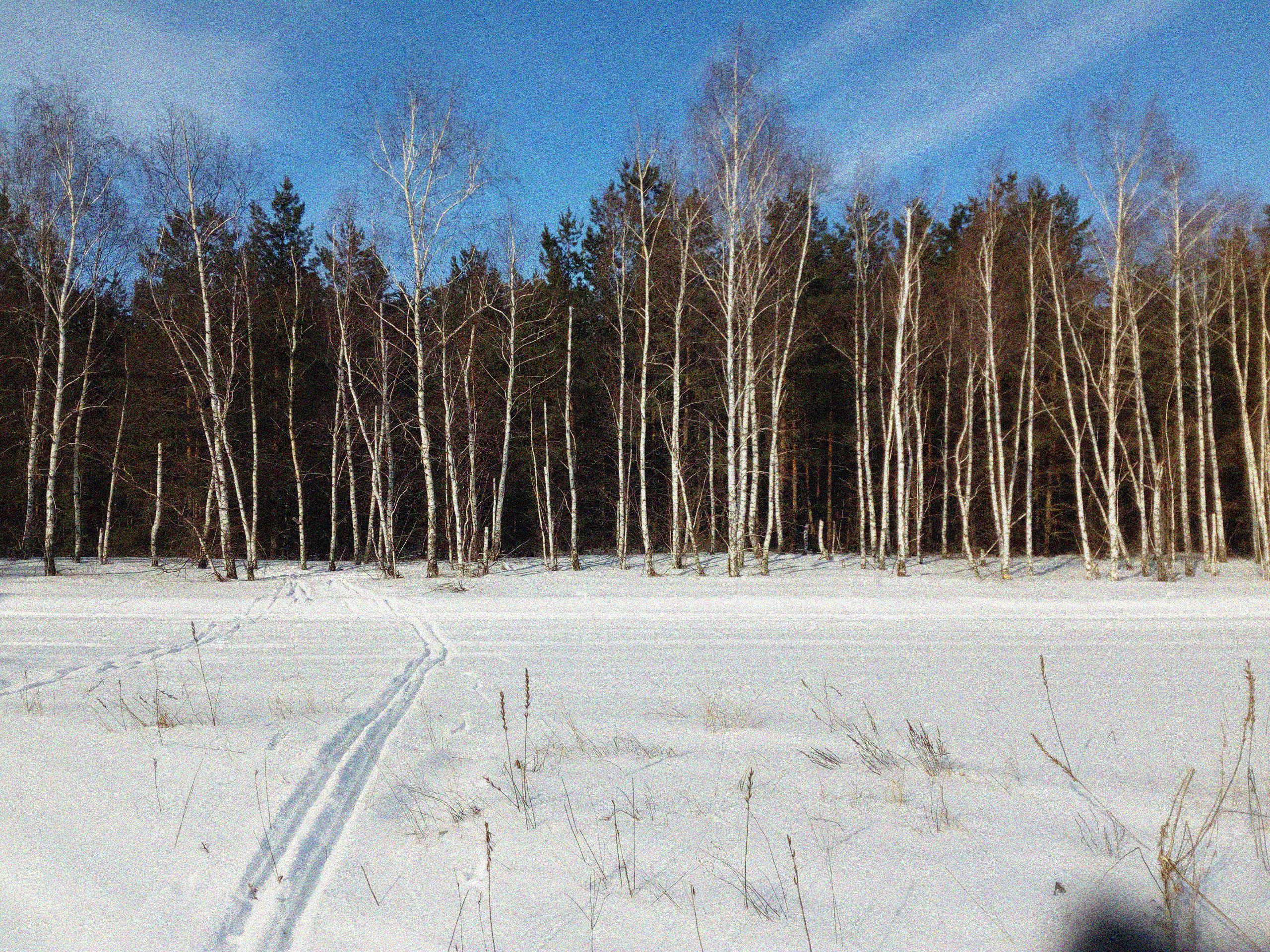 лыжная прогулка в лесу, кататься на лыжах в лесу