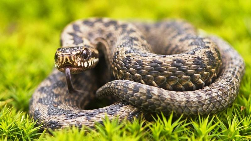 Первая помощь при укусе змеи