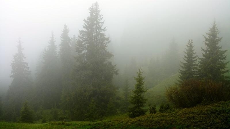 Как определить влажность по небу
